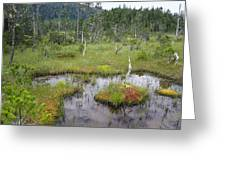 Muskeg Bog With Ponds, Mitkof Island Greeting Card