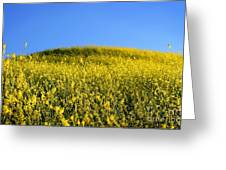 Mustard Grass Greeting Card
