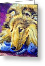 My Blue Teddy - Shetland Sheepdog Greeting Card by Lyn Cook