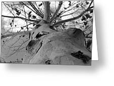 My Branches Are Strong Greeting Card