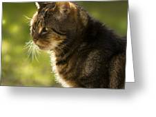 My Cat Greeting Card