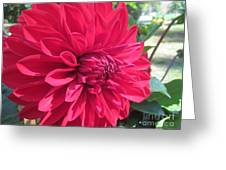 my favorite Dahlia Greeting Card