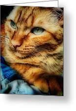 My Favorite Feline Greeting Card
