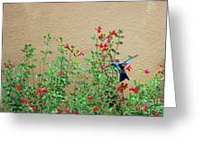 My Little Hummingbird Greeting Card