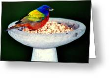 My Painted Bunting Greeting Card
