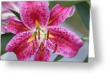 My Pink Lily Greeting Card by Marilyn West