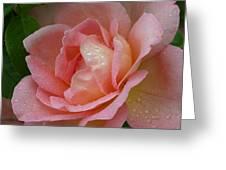My Pink Rose Greeting Card