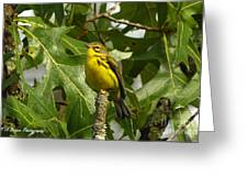 My Pretty Yellow Belly Greeting Card