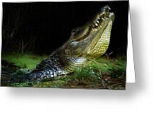 My Swamp Greeting Card