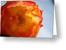 My Yellow Orange Rose Greeting Card