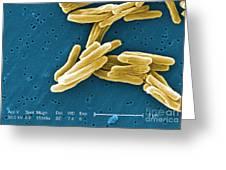 Mycobacterium Tuberculosis, Sem Greeting Card