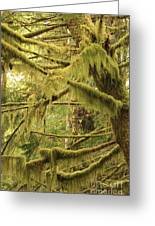 Mysterious Moss Greeting Card