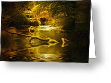 Mystery In Forest Greeting Card