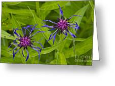Mystery Wildflower 2 Greeting Card by Sean Griffin