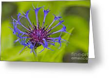 Mystery Wildflower 3 Greeting Card by Sean Griffin