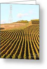 Napa Valley Vineyard . 7d9065 Greeting Card