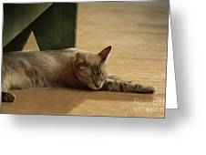 Naping In The Shade Greeting Card