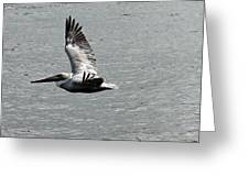 Naples Florida Pelican On The Prowl Greeting Card