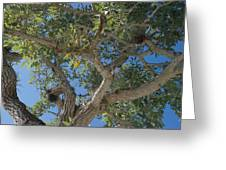 Naples Tree Greeting Card