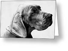 Napoleon Mischief Dog Portrait  Greeting Card