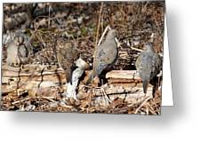 Napping Doves Greeting Card