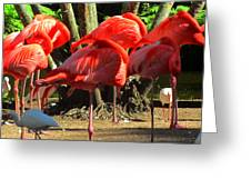 Napping Flamingoes Greeting Card
