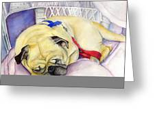 Naptime For Baden Greeting Card
