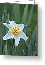 Narcissus In The Rain Greeting Card