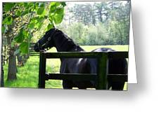National Stud Farm Ireland Greeting Card
