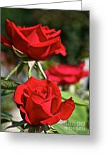 National Trust Rose Greeting Card