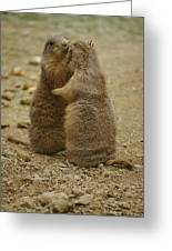 National Zoo 2 Prarie Dogs Sitting Greeting Card