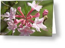 Native Azalea Greeting Card
