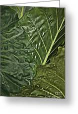 Natural Abstract 39 Greeting Card