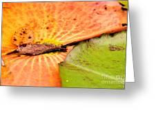 Natural Abstract 40 Greeting Card
