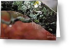 Natural Bling Strings Greeting Card