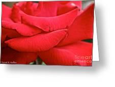 Natural Red Carpet Greeting Card