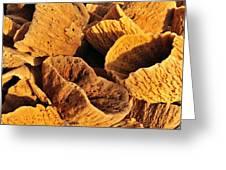 Natural Sponges Greeting Card