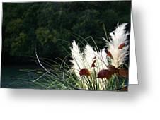 Natural Still Life Greeting Card
