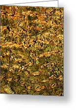Natural Texture Greeting Card by James Hammen