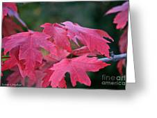 Naturally Vibrant Greeting Card