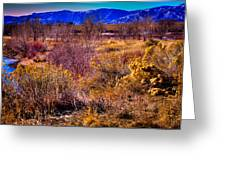 Nature At It's Best In South Platte Park Greeting Card
