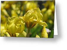 Nature In Yellow Greeting Card
