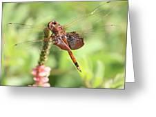 Nature Square - Saddleback Dragonfly Greeting Card