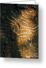 Nature's Abstractions IIi Greeting Card