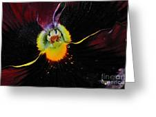 Nature's Amazing Colors - Pansy Greeting Card