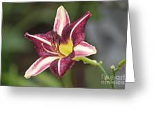 Natures Canvas Greeting Card
