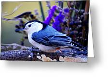 Nature's Charm... Greeting Card