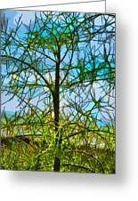 Nature's Church Windows  Greeting Card