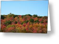 Natures Colors Greeting Card
