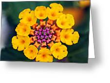 Nature's Designs Greeting Card
